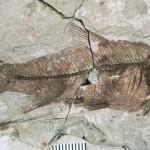 fosil-720x358